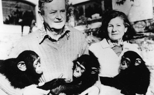Simon,-Peggy-and-chimps