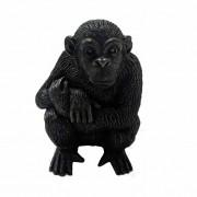 chimp front veiw